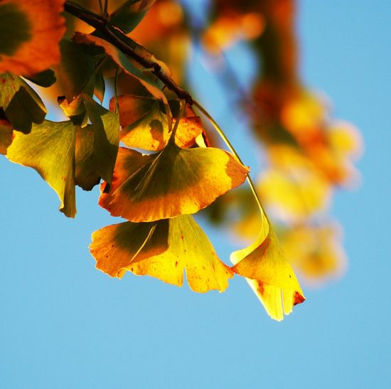 Low angle view of autumn leaf against sky