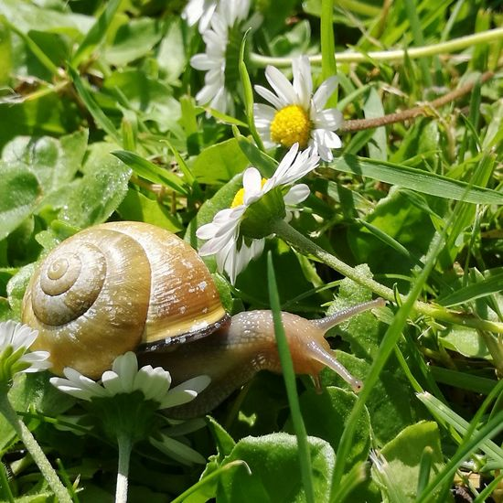 Naturelovers Animal Photography Nature Photography Animal Love Animal_collection Schnecke Schneckenhaus Escargot Slog Animallover