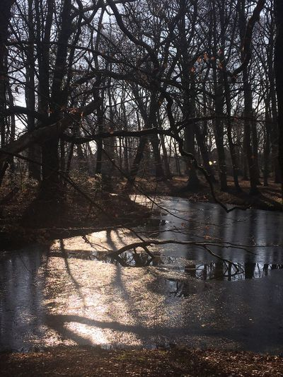 Frozen Sun And Shadow Backlight Frozen Pond Nearly Frozen Tree Nature Tranquil Scene Tranquility Sunlight Beauty In Nature Water Landscape Reflection Sky
