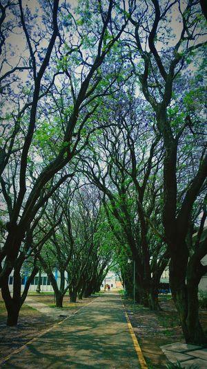 Jacaranda's Park Autor: J. Alejandro Hdz.