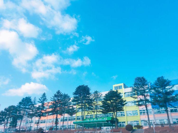 Tree Sky School Graduation Bye Bye Love Sommergefühle Let's Go. Together. EyeEm Selects