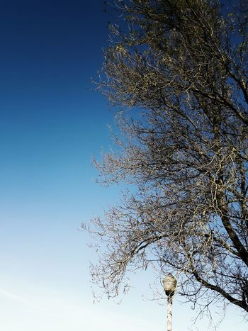 Sky No People Beauty In Nature Tree Day Nature Blue Sunlight Tranquility Clear Sky Mobilephotography Minimalism Minimal Lamp Post Instagramer Umeugram Portugal Igersportugal