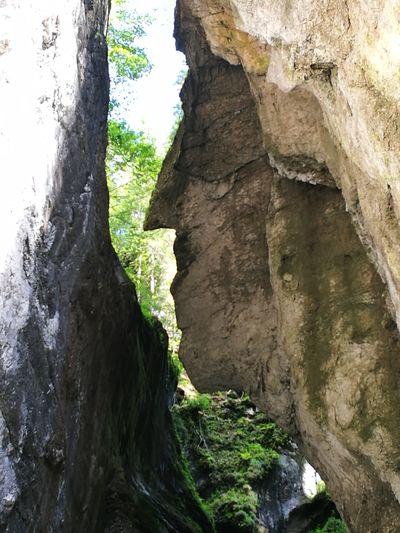 Felsen-Kopf