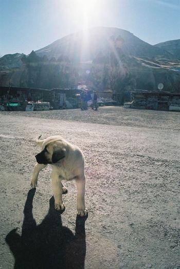 2006 Collection Domestic Dog Feel The Journey, Kapadokya Kuwankuwan My Favorite Photo Puppy Turkey Izmir Türkiye