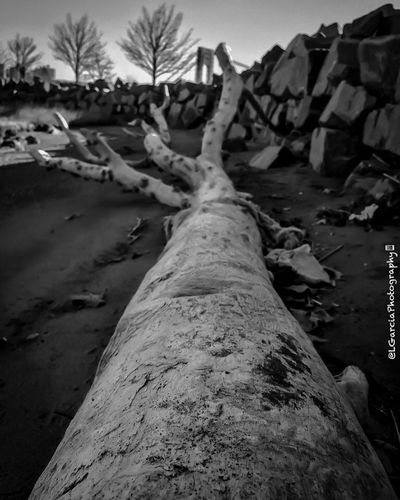 Fallen tree. LGarciaPhotography Monochrome Contrast Nature Nature_collection Nature Photography Black And White Black And White Photography Light And Shadow Light IPhone IPhone Photography Composition Black & White Blackandwhite Blackandwhite Photography Black And White Collection  NYC New York New Jersey Palisades Interstate Park Clouds And Sky George Washington Bridge Streetphotography Urban Exploration