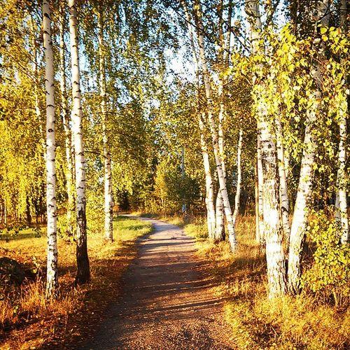 Вот такая аллея у меня на пути со школы) Beautiful Bright Trees Today town good sun nature new way photo happy creative vscobest vscolovers vscocam vscostyle vscogood vsco