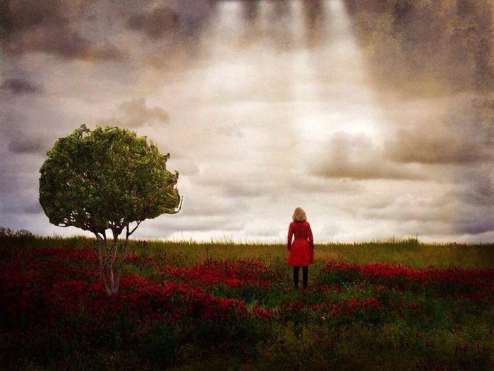 Fields of red cover The Illusionist - 2014 EyeEm Awards