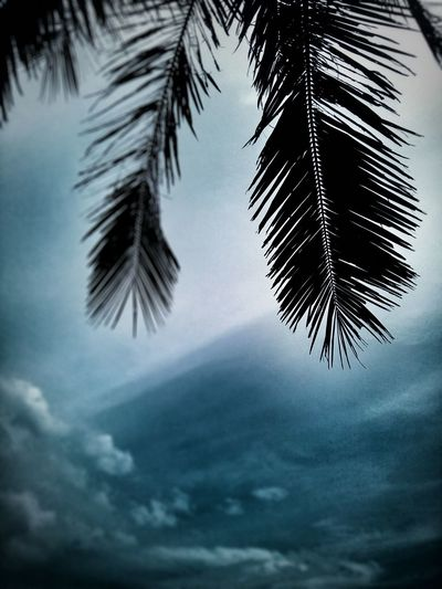 8.20.16 Daylight Cellphone Photography Manila Phillipines Coconut Palm Tree Sky And Clouds