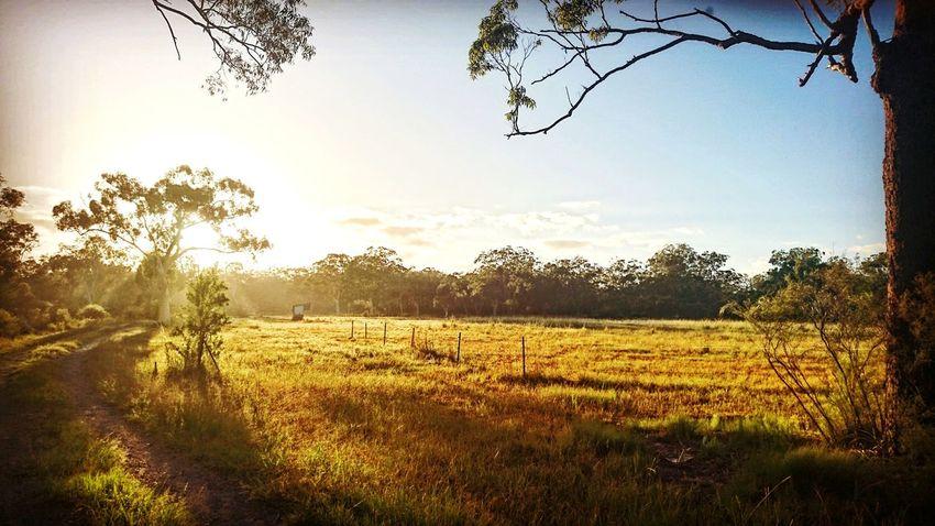 Aussie backyard Nature BackToSummer Beauty In Nature Australia