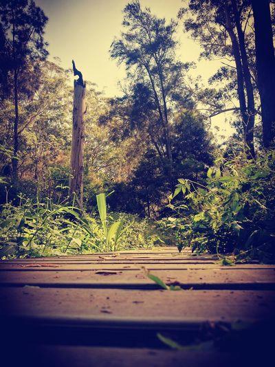 Bush Wooden Pathway Dead Tree Forest Sky