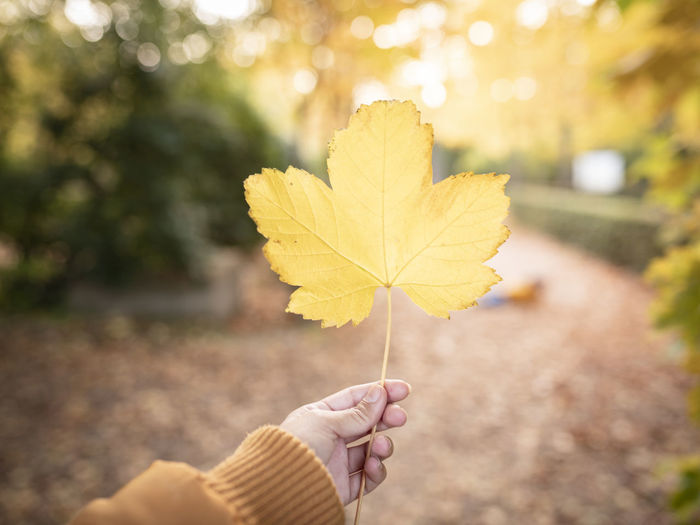 Woman holding maple leaf during autumn