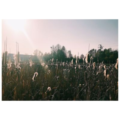 Sweet November Mirano Italy Growth Plant Nature Grass No People Tranquility Field Outdoors Day Beauty In Nature Sky Close-up