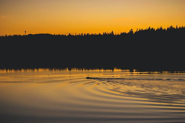 Go fetch the goldwn hour Sunset Reflection Water Lake Nature Scenics Landscape Outdoors Silhouette No People Tranquility Beauty In Nature Sky Dusk