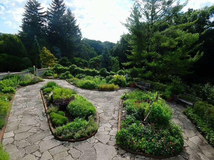 Tree Growth Nature Green Color Plant No People Ornamental Garden Outdoors Day Garden Path Beauty In Nature Botanical Garden Sky
