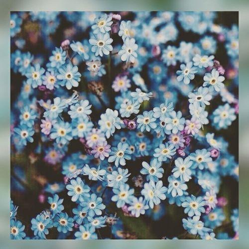 Hobby Likeforlike Planting Relaxing Enjoying The Sun Flowers Blue 👑🌸☀