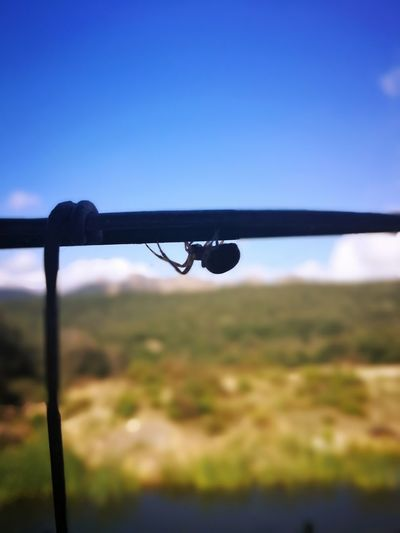 😁 Spider Nature_collection Eyenaturelover Sardinia Sardegna Italy  Sardinia Sardegna Spider Clear Sky Sky Close-up