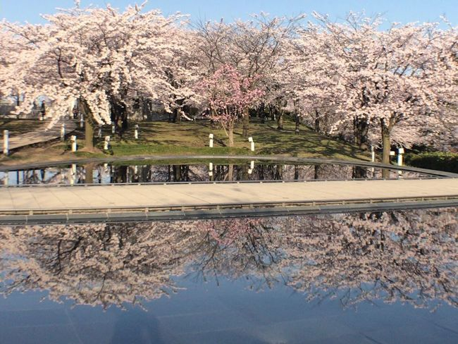 桜 Niigata 白山 空中庭園
