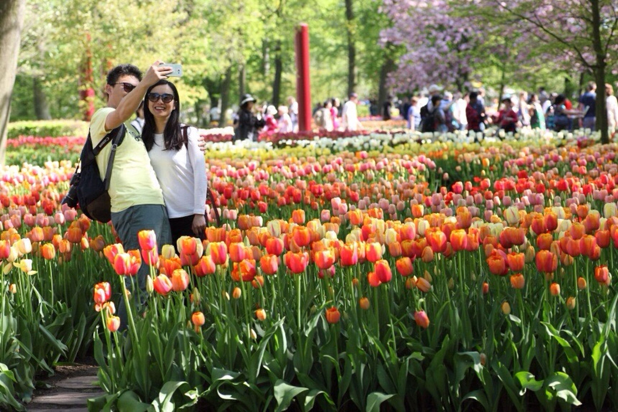 flower, freshness, leisure activity, lifestyles, beauty in nature, tulip, casual clothing, fragility, young women, person, incidental people, young adult, growth, park - man made space, field, tourist, plant, nature, tourism, vacations, day, outdoors, tranquility, focus on foreground, red, rural scene, multi colored, springtime