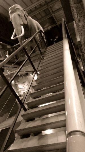 Stairs Sepia Grande Galerie De L évolution Escaliers