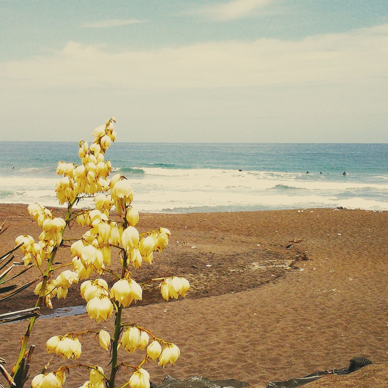 nature, beauty in nature, sea, water, flower, horizon over water, tranquility, beach, scenics, sky, tranquil scene, outdoors, no people, day, plant, growth, fragility, sand, yellow, freshness