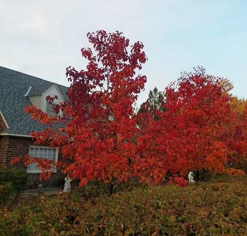 autumn Tree Red Pixelated Sky Building Exterior Architecture