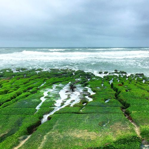 Reed Ridges Sea Park Geology New Taipei City Taiwan Relaxing Hiking EyeEmNewHere