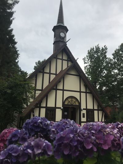 View of purple flowering plants against building
