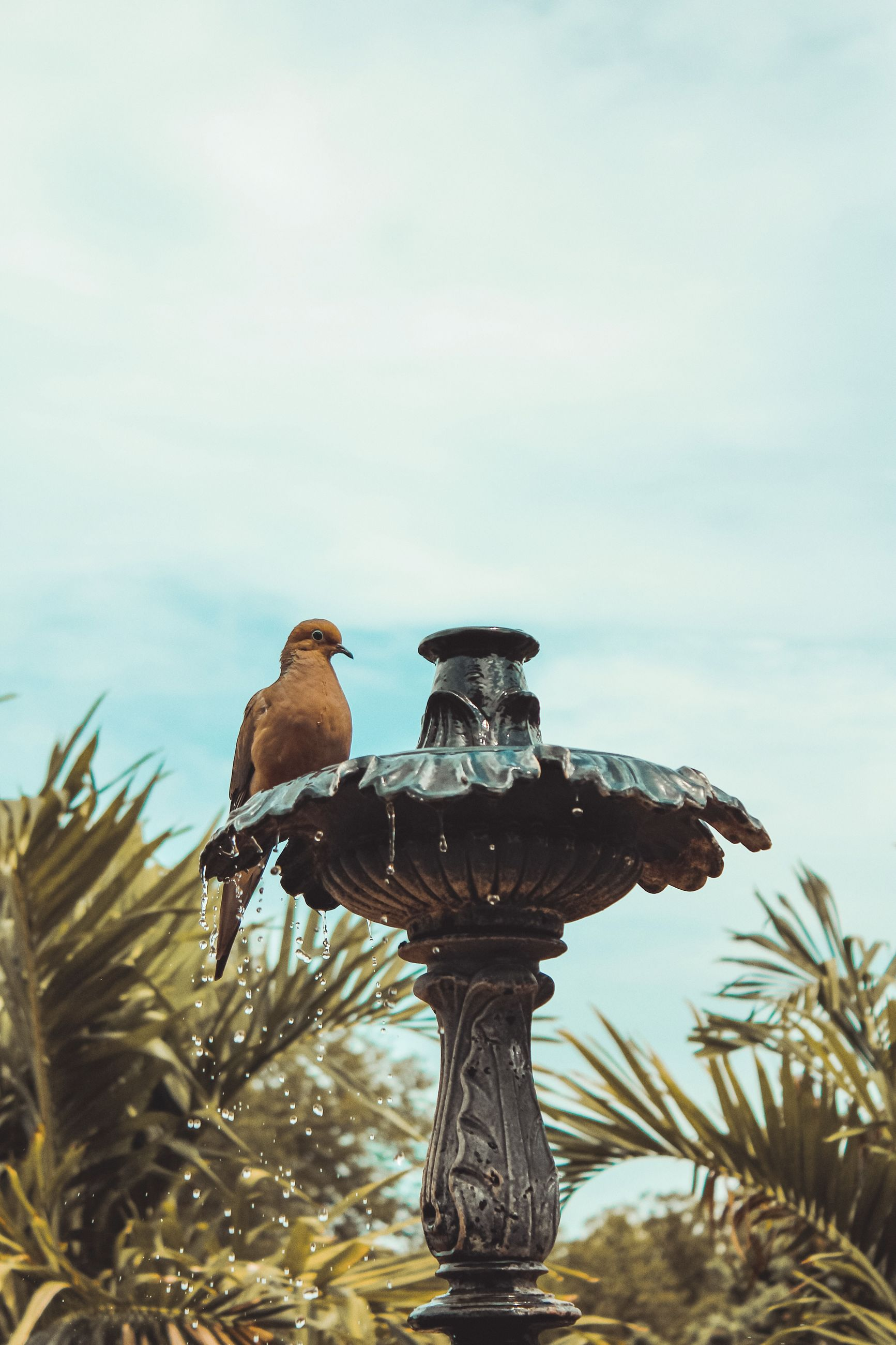 animals in the wild, vertebrate, bird, animal themes, animal, animal wildlife, sky, water, day, nature, perching, group of animals, no people, focus on foreground, cloud - sky, outdoors, sea, plant, two animals, eagle