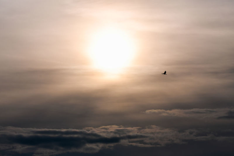 Silhouette of bird flying in sky