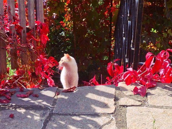 270/365 September 27 One Year Project 2017 Autumn Autumn Colors Autumn Leaves Nova Levante South Tyrol Italy Trentino Alto Adige Alto Adige Animal Themes Domestic Cat Domestic Animals Mammal Day One Animal Sunlight No People Outdoors Pets Shadow Feline Bird Nature Tree The Week On EyeEm