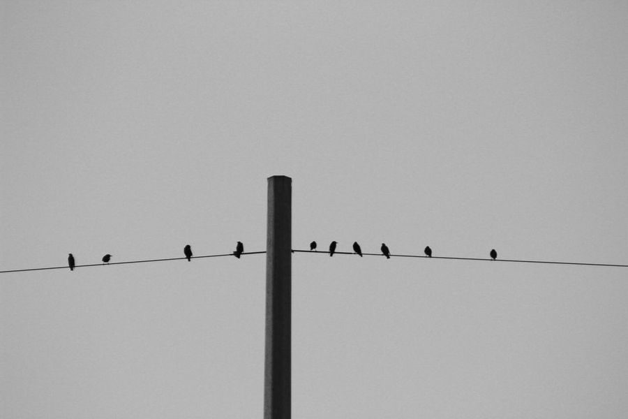 Bird Outdoors No People