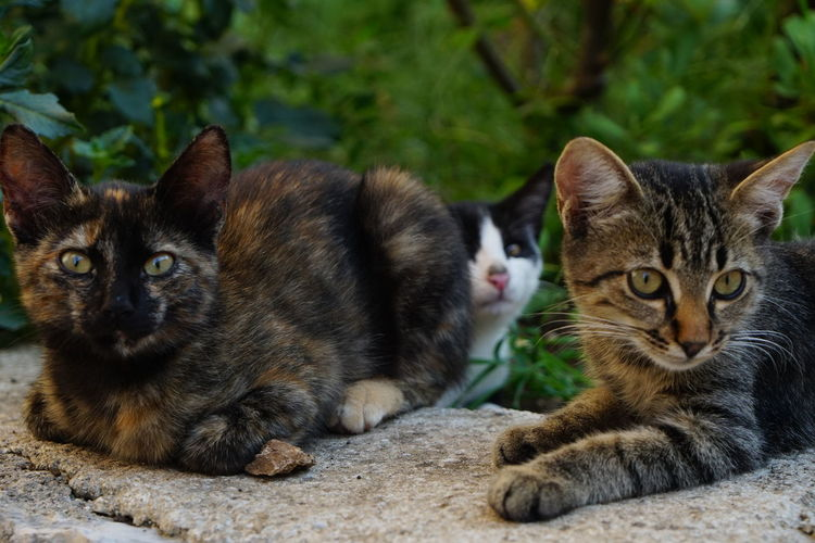 Portrait of tabby cats