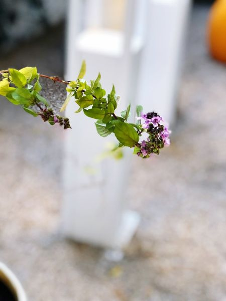 Flowering Plant Flower Plant Freshness Plant Part Day Growth Beauty In Nature Focus On Foreground Leaf Nature Close-up Vulnerability  Fragility No People Outdoors Flower Head Selective Focus Built Structure Inflorescence