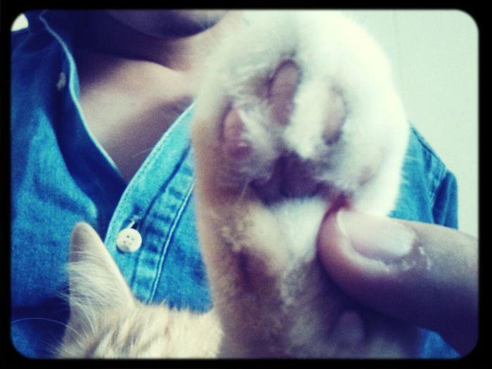 my little cat, my baby Mia. Sweetheart Relaxing Love Babycat ❤