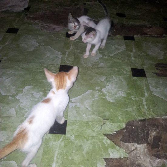 I seriously wana take them all home but can't. :'( I want a kittttttyyyy!!! Stray Cats Filipinosbelike Pinay want adopt love