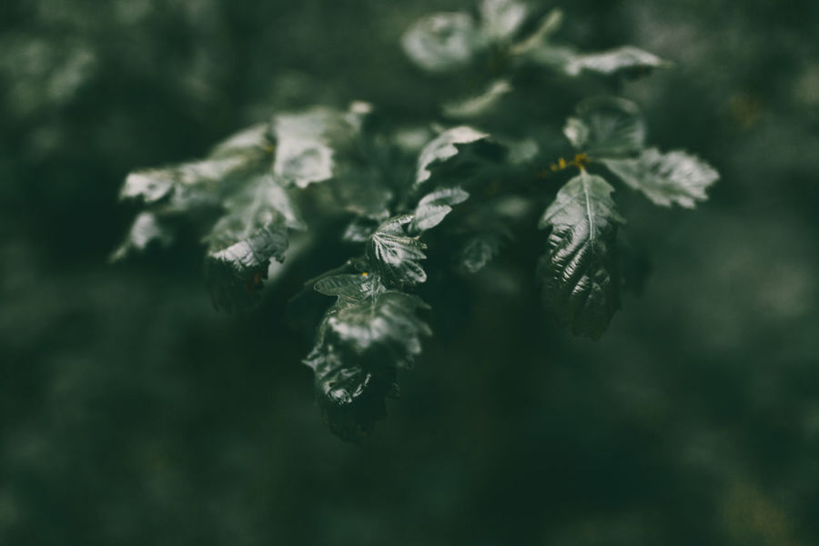 Aesthetic Aesthetic Nature Beauty In Nature Close-up Dark Green Dark Green Background Dark Green Leaves Day Flower Fragility Freshness Green Leafs Green Nature Growth Leafs Leaves Nature Nature No People Outdoors Plant The Week On EyeEem Tumblr