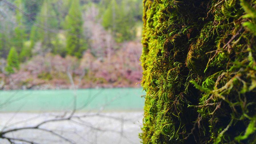 Moss on the Eel