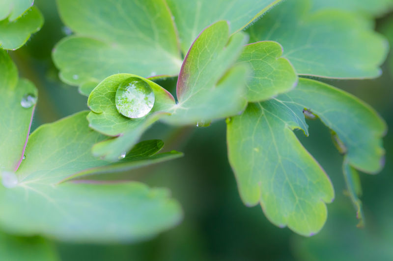 After the rain After The Rain Beauty In Nature Bubble Close-up Day Drop Freshness Green Color Growth Leaf Macro Macro Beauty Macro Nature Macro Photography Nature Nature Naturelovers Outdoors Plant Rain Drop Rain Drops Rain Drops On Flowers Rain Drops On Leaves Water
