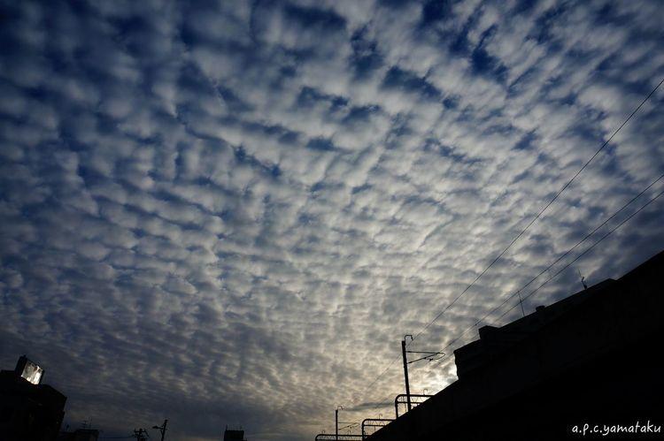 Stratocumulus/日暮れに見上げた空… Clouds And Sky Evening Sky Sony Nex6 Stratocumulus Nimbus Fukui Colors Beautiful Relaxing