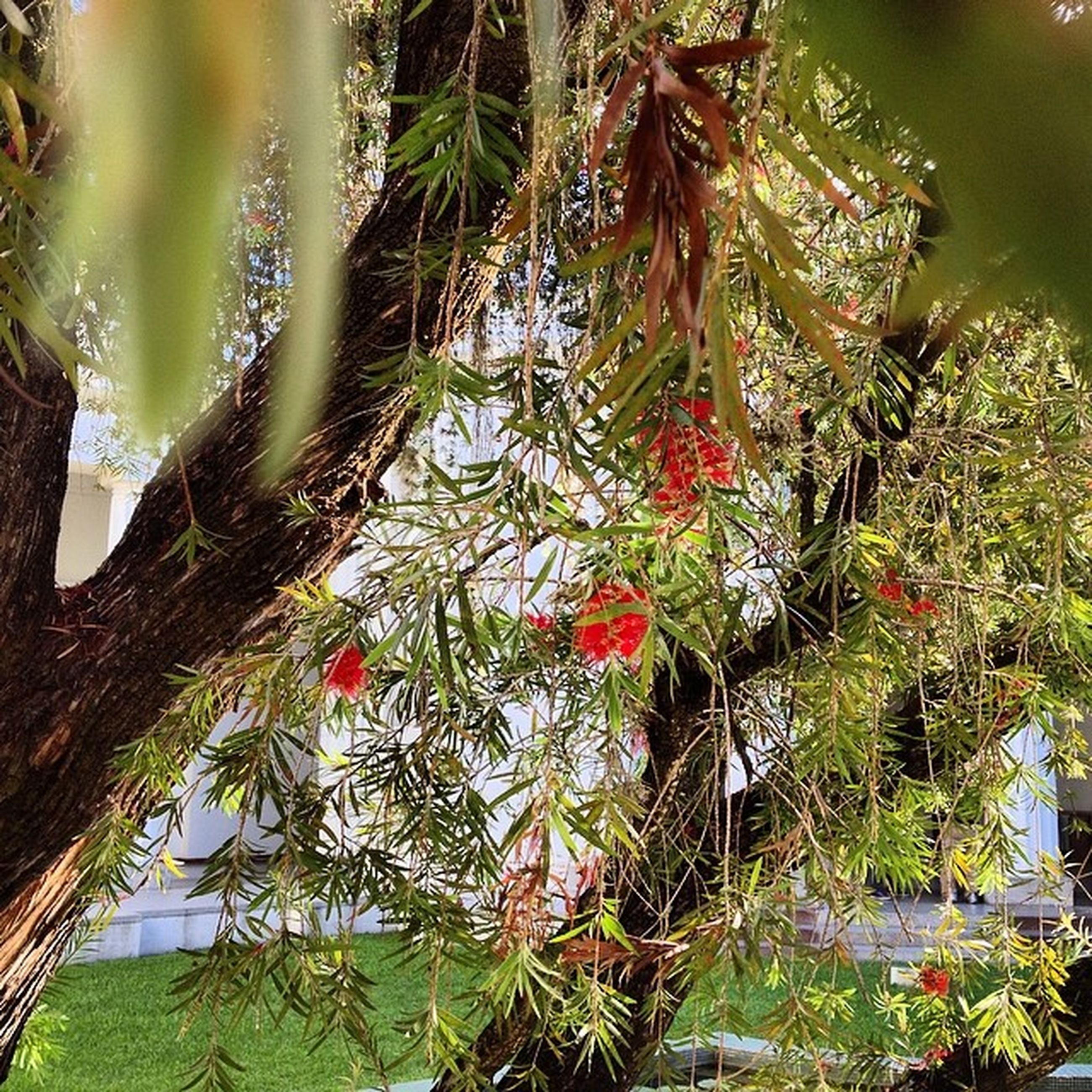 growth, plant, leaf, tree, nature, green color, branch, growing, palm tree, beauty in nature, tranquility, day, outdoors, no people, water, close-up, green, freshness, red, low angle view
