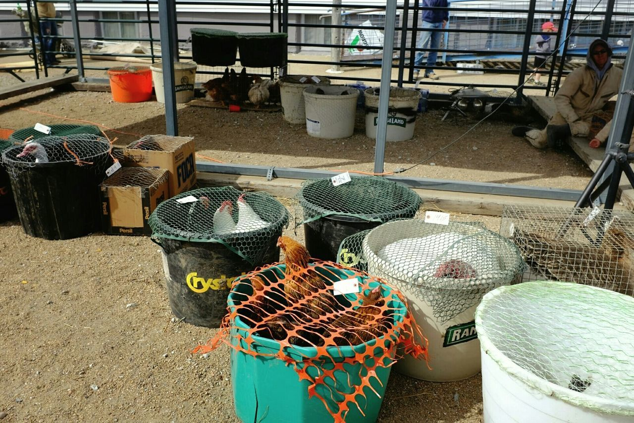 high angle view, basket, day, for sale, container, large group of objects, outdoors, fishing net, fishing equipment, no people