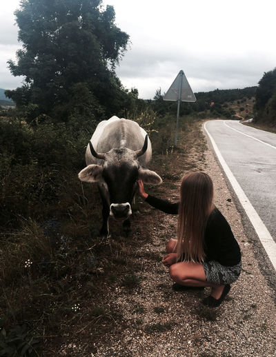 Girl petting a cow on the road. Road Cow Day Landscape Love Animals Nature One Animal One Person Outdoors Petting Petting Animals Petting Cow Road Sky Street Young Girl