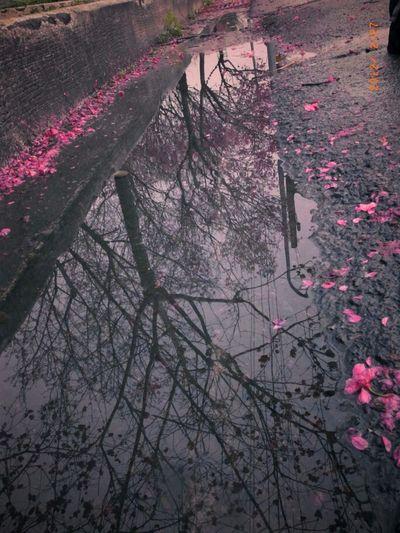 Sakura EyeEm Nature Lover Flowers RICHO GR EyeEm Taiwan Lines, Shapes And Curves