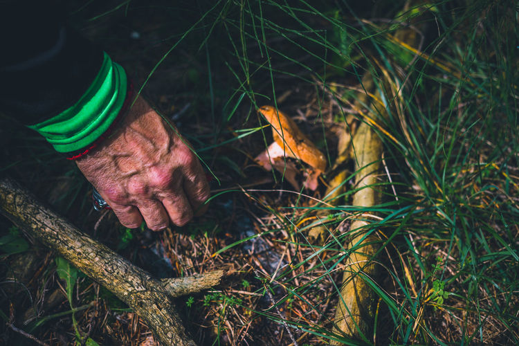 Cropped hand of person picking mushroom in forest