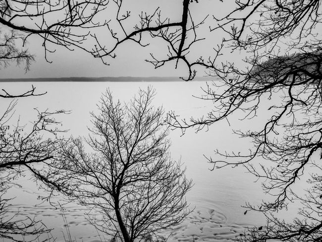 Through EyeEmNewHere Black And White Winter Snow Frozen Lake Island Nature Bare Tree Beauty In Nature Outdoors Lake No People Scenics Day Water Tree Sky The Traveler - 2018 EyeEm Awards The Great Outdoors - 2018 EyeEm Awards The Still Life Photographer - 2018 EyeEm Awards The Creative - 2018 EyeEm Awards