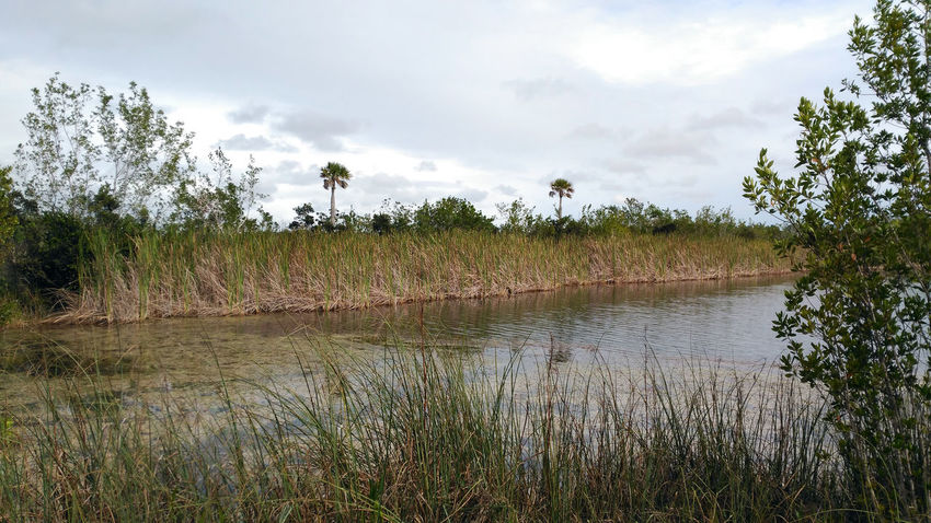 Day Grass Growth Lake Landscape Marsh Nature No People Outdoors Scenics Sky Tree Water Wetland