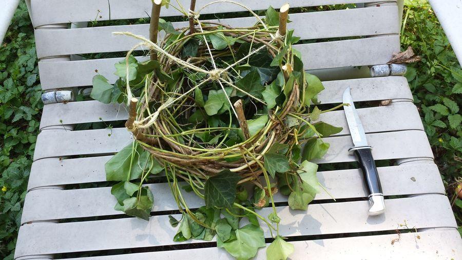Robin Nest Artificial Nest Bird Nest Bird Rescue Building A Nest Nest Nest Building Replacement Nest Replacing A Nest