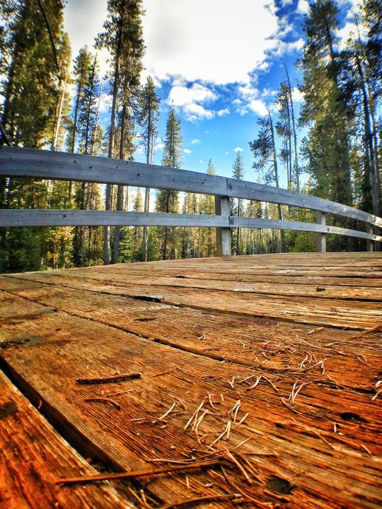 Bridge at Silent Creek Tree Wood - Material Wooden Railing Footbridge Sky Day Outdoors Cloud Surface Level Bridge Solitude No People WoodLand Tranquility Tranquil Scene