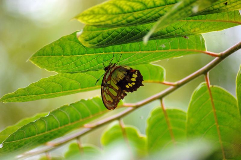 Nature Finest Butterfly Insect Photography Green Green Green!  Tropical Paradise Flora Fauna Nature Leaves Plants Atmospheric Nature