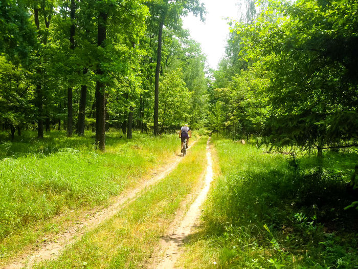 Rear view of man riding motorcycle on road amidst trees in forest